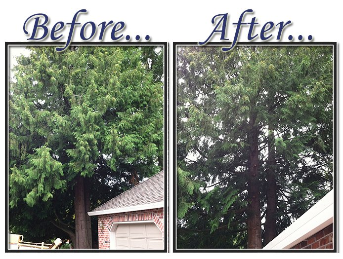 before&aftertree10