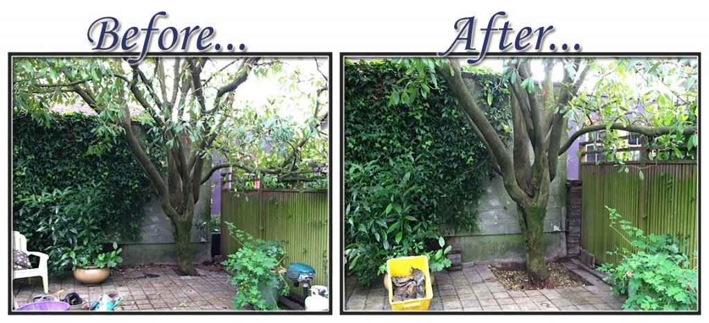 before&aftertree2