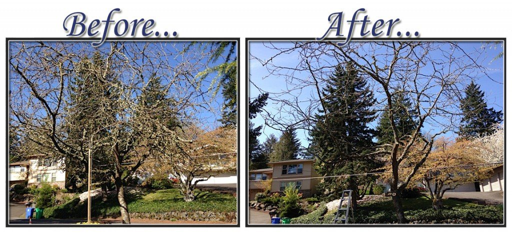 before&aftertree3