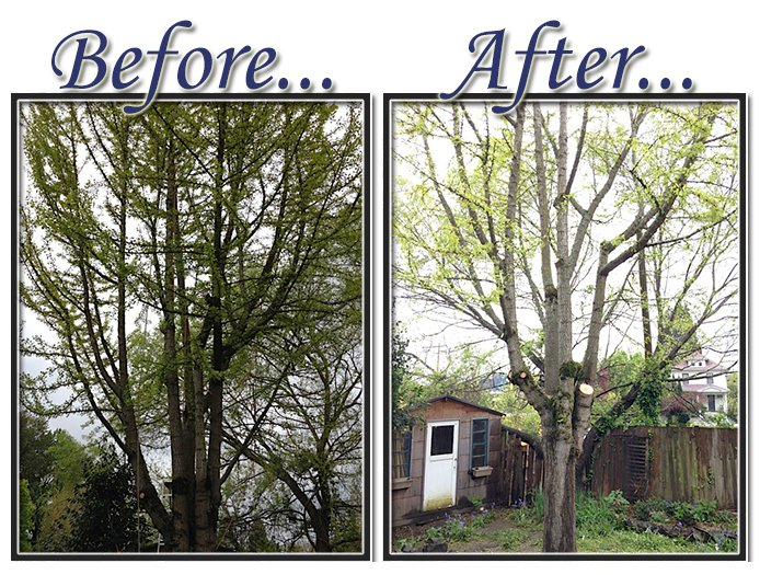 before&aftertree4