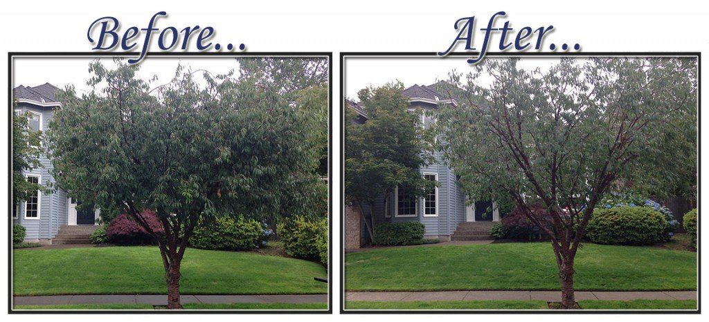 before&aftertree6