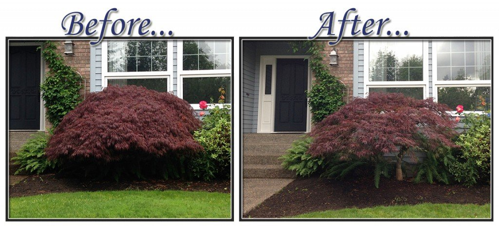 before&aftertree7